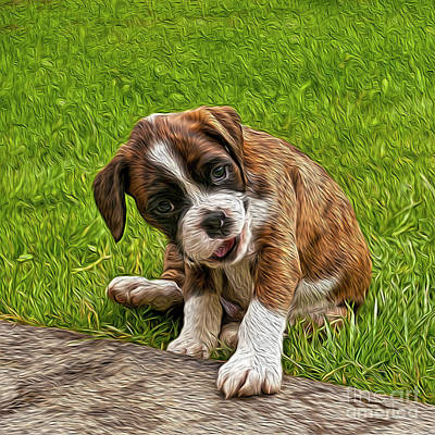 Photograph - Boxer Puppy by Chris Thaxter