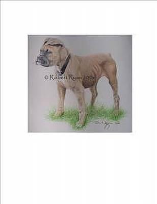 Cute Boxer Drawing - Boxer by Robert Ryan