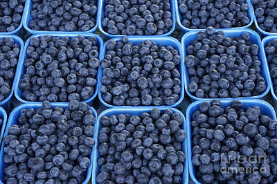 Photograph - Boxes Of Blueberries by John  Mitchell