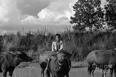 Photograph - Boy And Cows by Arik S Mintorogo
