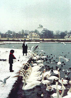 Boy Feeding Swans- Germany Original by Nancy Mueller