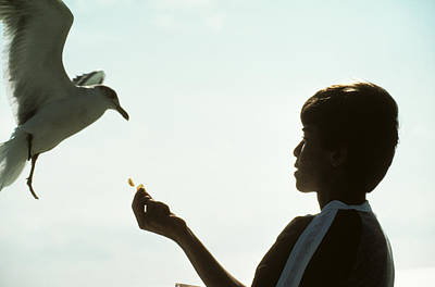 Animals Royalty-Free and Rights-Managed Images - Boy Feeds Seagull by Carl Purcell