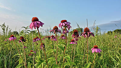 Photograph - Boylan Cone Flower by Bonfire Photography