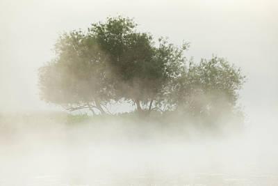 Photograph - Boyne Trees by Peter McCabe