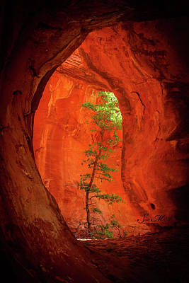 Photograph - Boynton Canyon 04-343 by Scott McAllister
