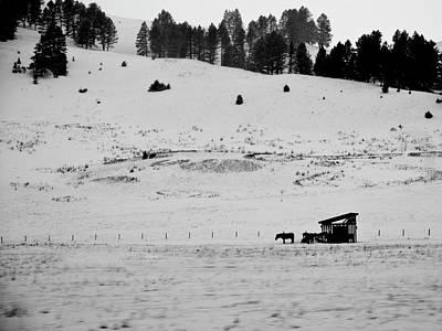 Photograph - Bozeman Winter by Roy Nierdieck