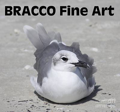 Photograph - Bracco Signature Collection by Philip Bracco