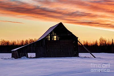 Photograph - Braced Against The Cold by Larry Ricker