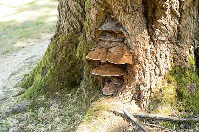 Photograph - Bracket Fungus In Fairhaven Park by Tom Cochran
