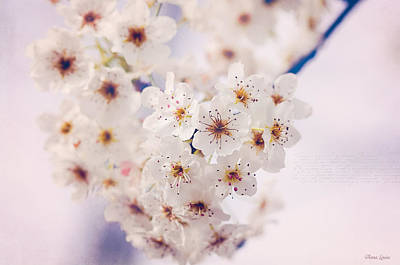 Photograph - Bradford Pear Blossoms by Anna Louise