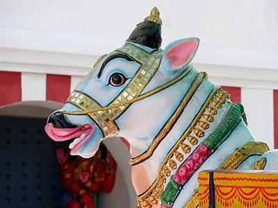 Photograph - Sacred Cow - Kapaleeshwarar Temple, Mylapore by Richard Reeve