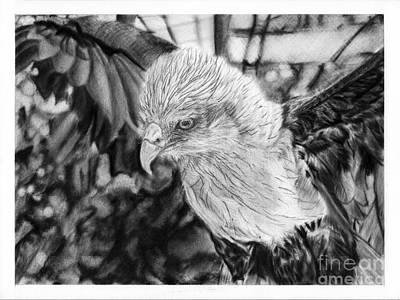 Brahminy Kite Art Print by Pinay PencilArt