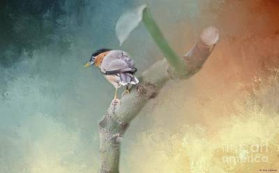 Starlings Digital Art - Brahminy Starling by Eva Lechner
