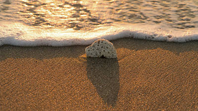 Photograph - Brain Coral Wave by Lawrence S Richardson Jr