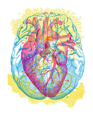 Painting - Brain Heart Circulation by Gary Grayson