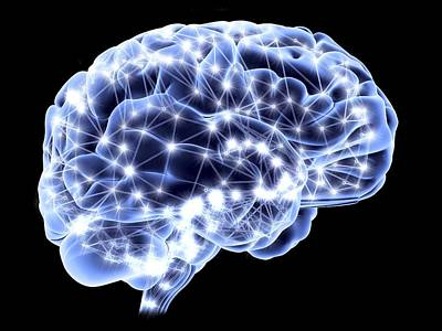 Human Brain Photograph - Brain, Neural Network by Pasieka