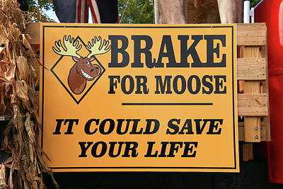 Photograph - Brake For Moose by Allen Beatty