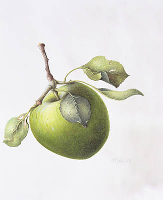 Apple Watercolor Painting - Bramley Apple by Margaret Ann Eden
