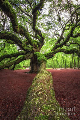 Photograph - Branch Leading To Angel Oak Tree by Michael Ver Sprill