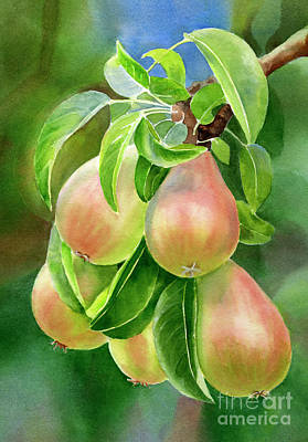 Branch Of Bronze Pears Print by Sharon Freeman