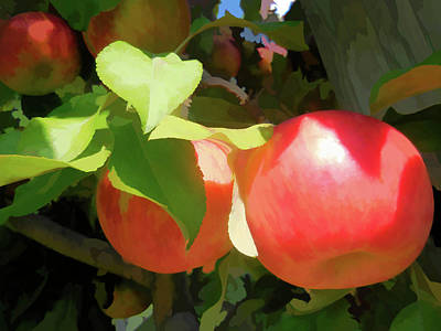 Yield Painting - Branch Of Organic Apples  by Lanjee Chee