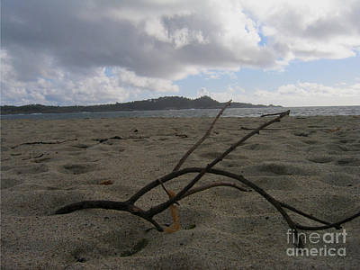 Photograph - Branch On A Beach by James B Toy