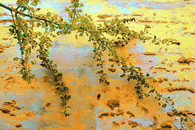 Photograph - Branch On Wall by Menega Sabidussi