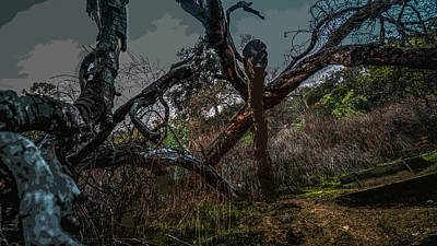 Photograph - Branch Out by Kenneth James