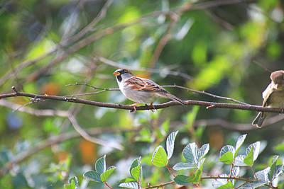Photograph - Branch Visitor by Tony Umana