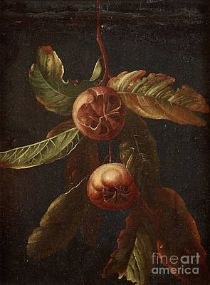 Fruits Painting - Branch With Medlar Fruits by Celestial Images