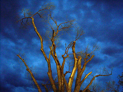 Photograph - Branches Against Night Sky H by Heather Kirk