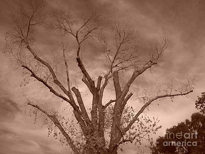 Photograph - Branches Against Sepia Sky H   by Heather Kirk