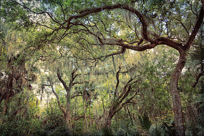Photograph - Branches And Bowers by John M Bailey