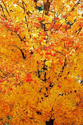 Branches Beneath Fall Beauty Art Print by Peter  McIntosh