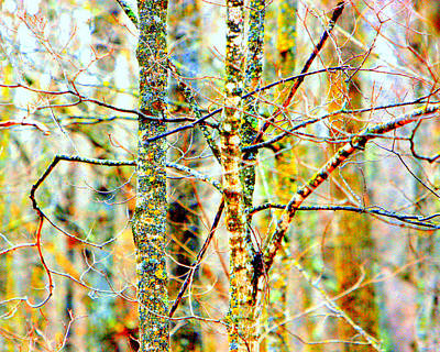 Photograph - Branches by David Ralph Johnson