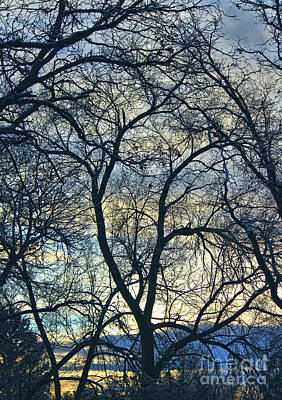 Photograph - Branches by Erica Hanel