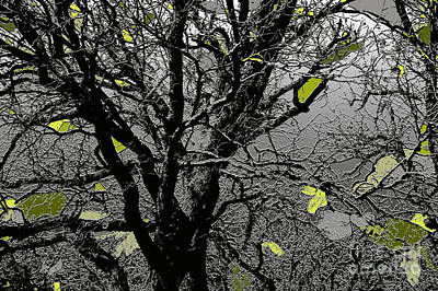 Photograph - Branches In Green II by Renie Rutten