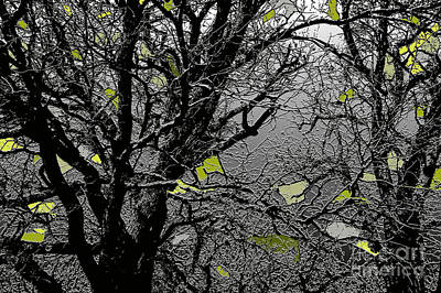 Photograph - Branches In Green by Renie Rutten