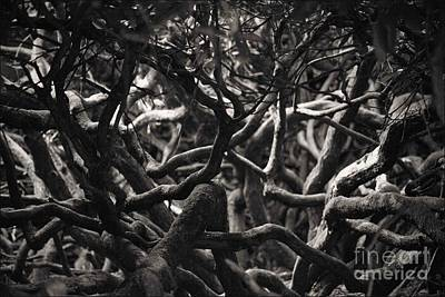 Photograph - Branches In Monochrome by Liz Alderdice