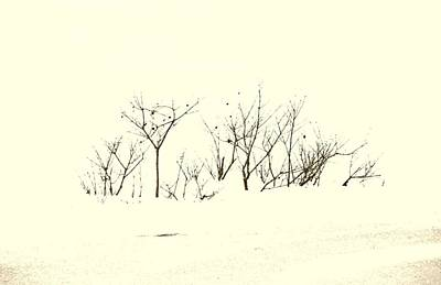 Branches In Snow Art Print