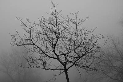 Photograph - Branches In Thick Fog by Kathryn Meyer
