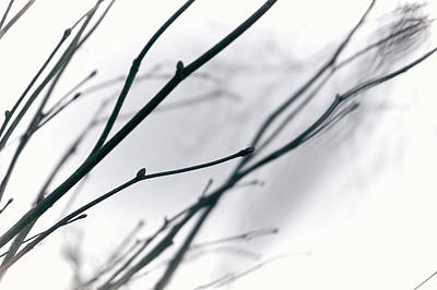 Photograph - Branches In White by Andreas Gerden