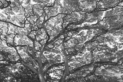 Photograph - Branches by Jeff Cook
