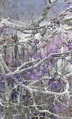 Photograph - Branches by John Hintz