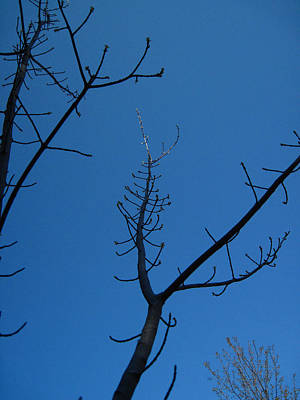 Photograph - Branches by Mary Bedy