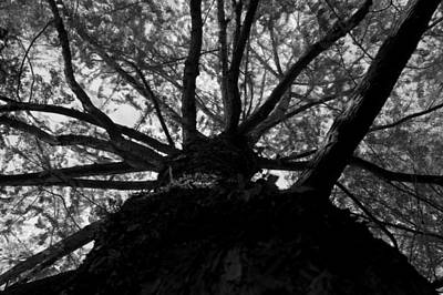 Photograph - Branches Of Life by Brad Scott