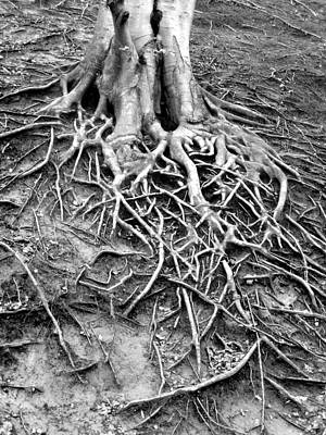 Branches Of Life Original