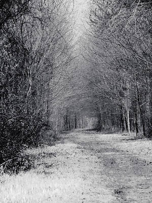 Photograph - Branches Of Spring - Black And White by MTBobbins Photography