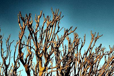Photograph - Branches Of The Amoreira by Dora Hathazi Mendes