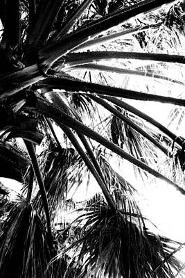 Photograph - Branches Of The Palm Tree 01 by Dora Hathazi Mendes